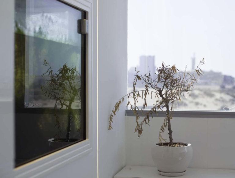 צמח על החלון